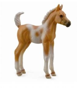 Pinto Foal Standing -Palomino
